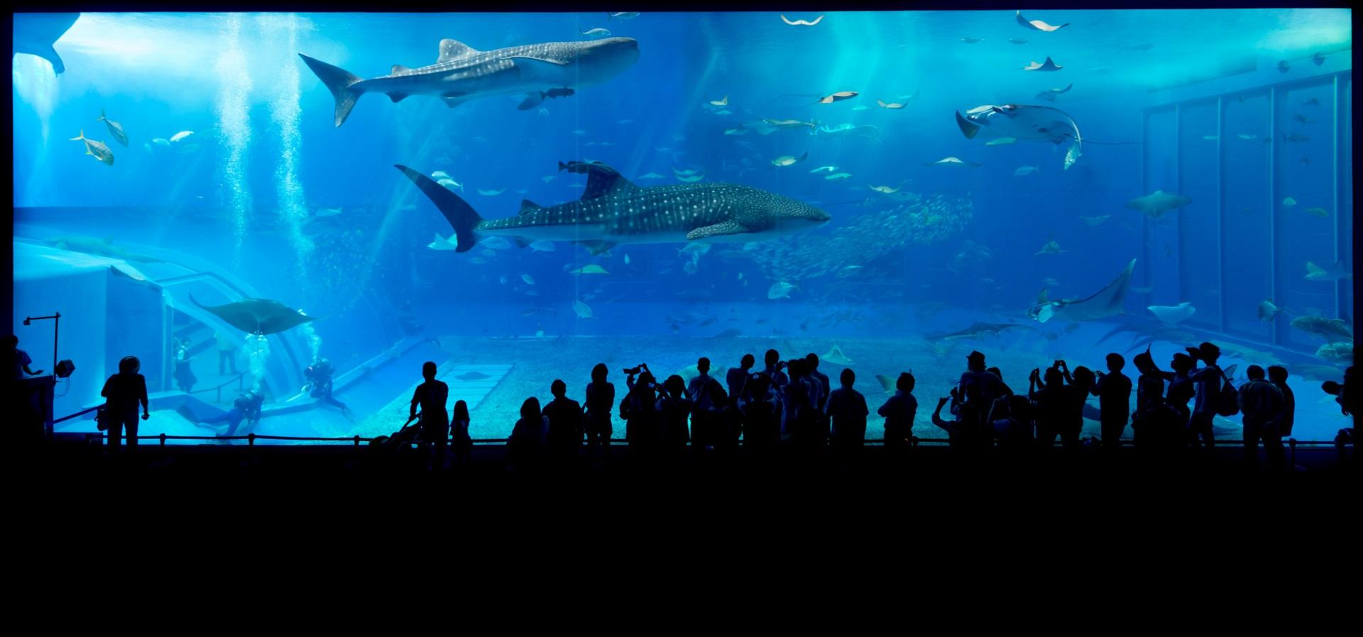 aquarium-725798_1920