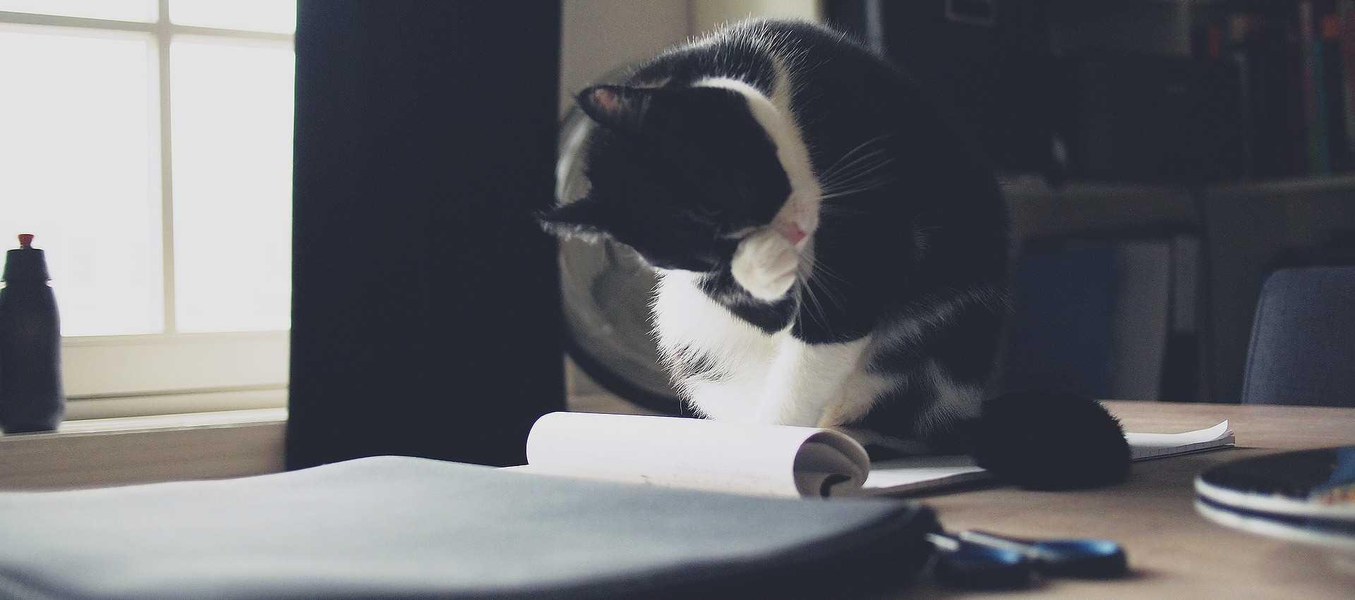 cat-paper